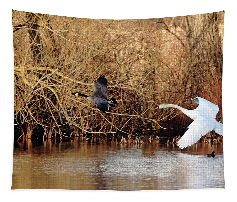 Mute Swan Tapestry featuring the photograph Yikes - Catching Up by Debbie Oppermann