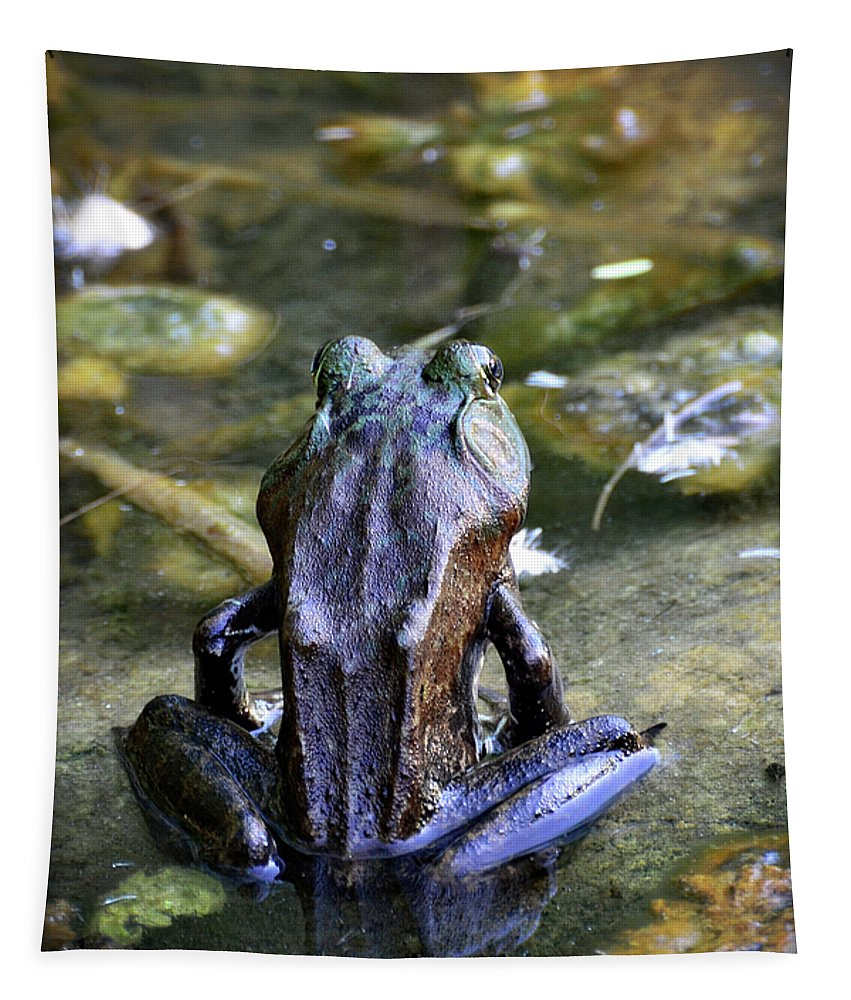 Frog Tapestry featuring the photograph Yoga Frog by Saija Lehtonen