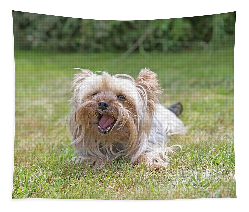 Yorkshire Terrier Tapestry featuring the photograph Yorkshire Terrier Is Smiling At The Camera by Jaroslav Frank