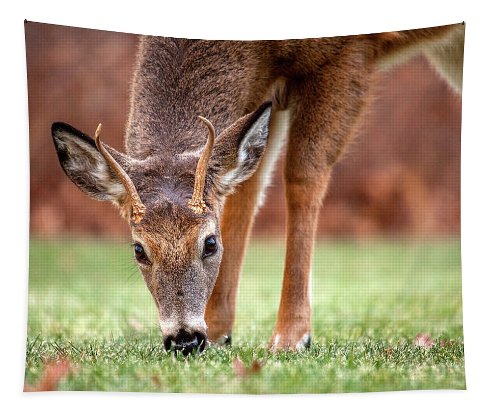 Deer Tapestry featuring the photograph Young Buck by Karol Livote