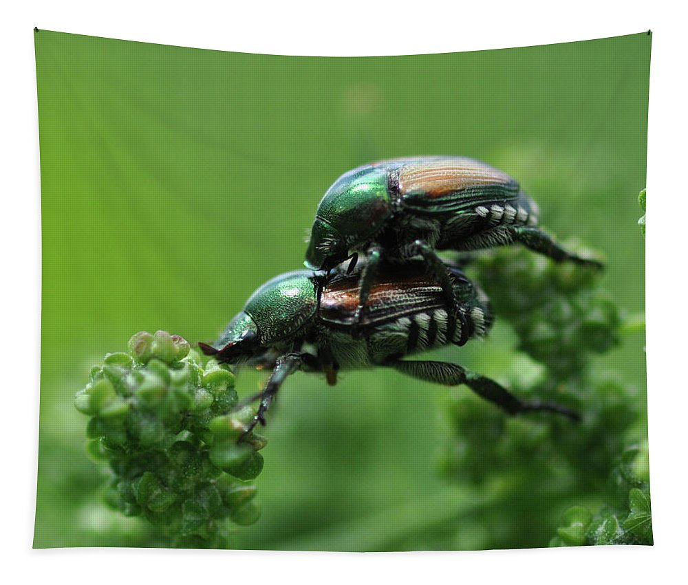 Beetles Tapestry featuring the photograph You've Got A Friend by Barbara Treaster