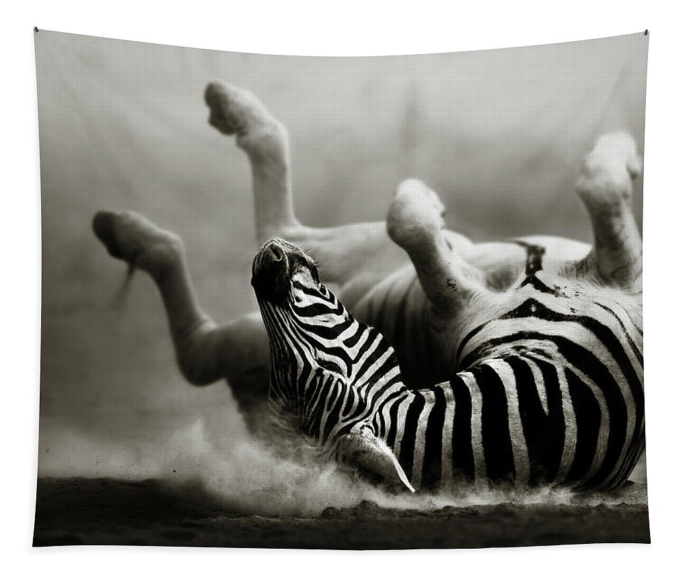 Zebra Tapestry featuring the photograph Zebra Rolling by Johan Swanepoel