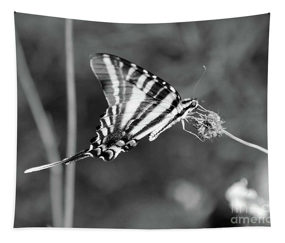 Zebra Tapestry featuring the photograph Zebra Swallowtail Butterfly Black And White by Karen Adams