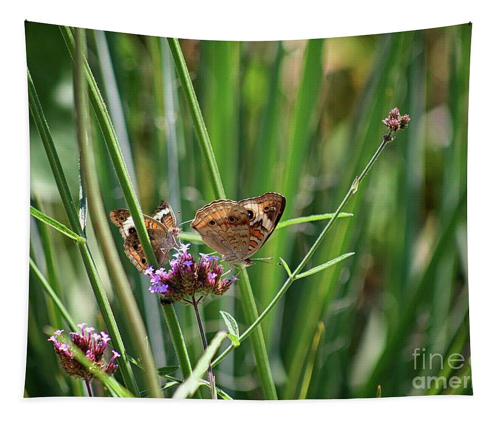 Buckeye Butterfly Tapestry featuring the photograph Buckeye Butterflies by Karen Adams
