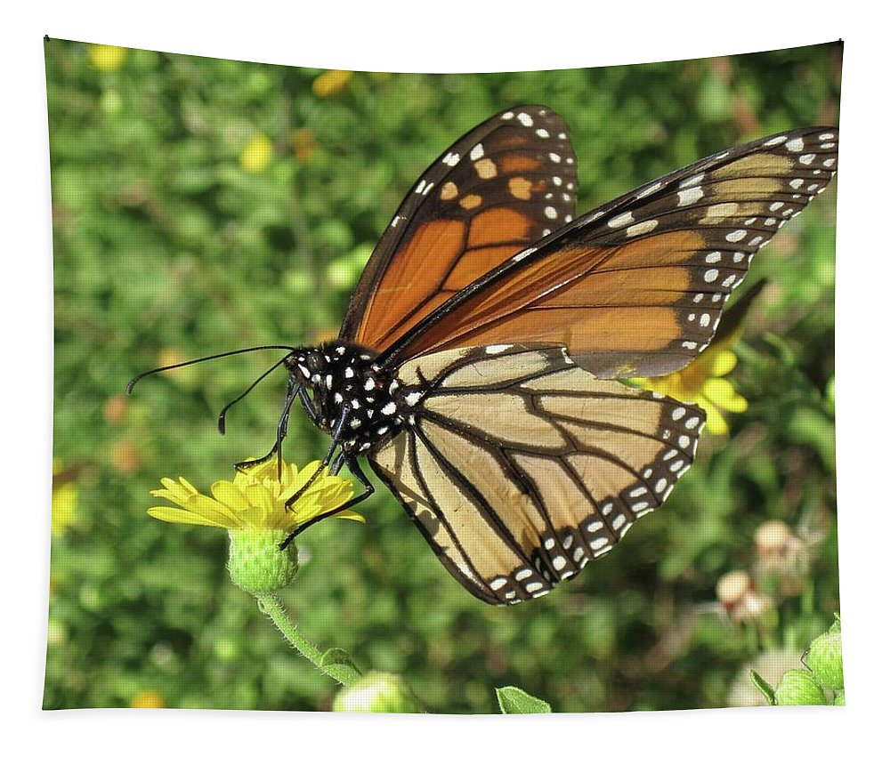 Butterfly Tapestry featuring the photograph Butterfly by Megan Cohen