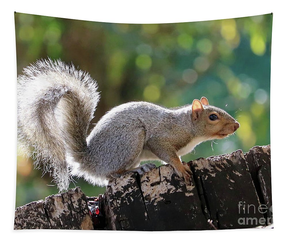 Squirrel Tapestry featuring the photograph Squirrel Friend by Carol Groenen