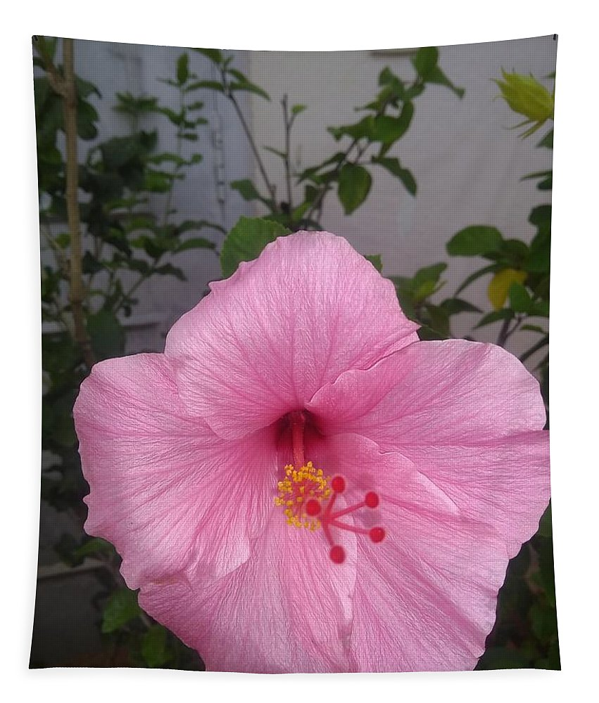 Tapestry featuring the photograph Pink Hibiscus by Nimu Bajaj and Seema Devjani