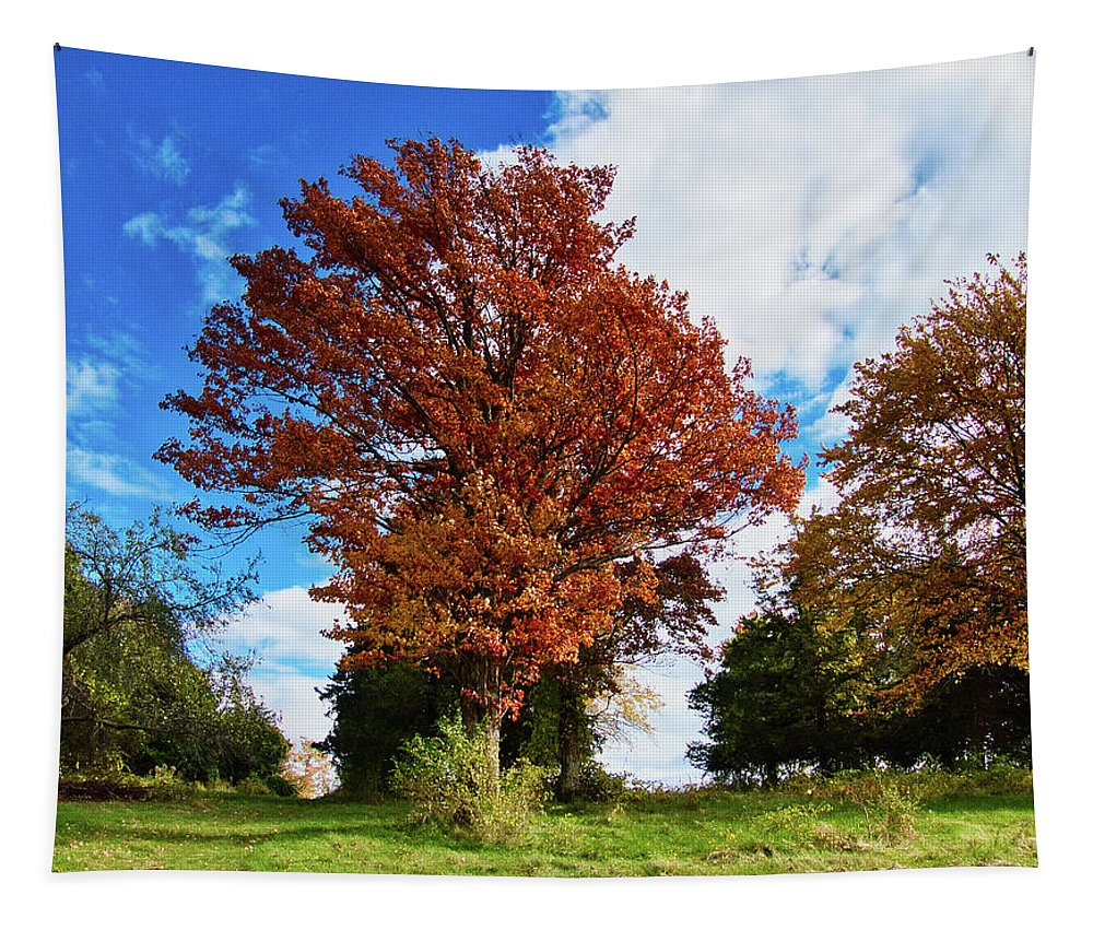 Trees Tapestry featuring the photograph Sagamore Hill by Scott Hufford
