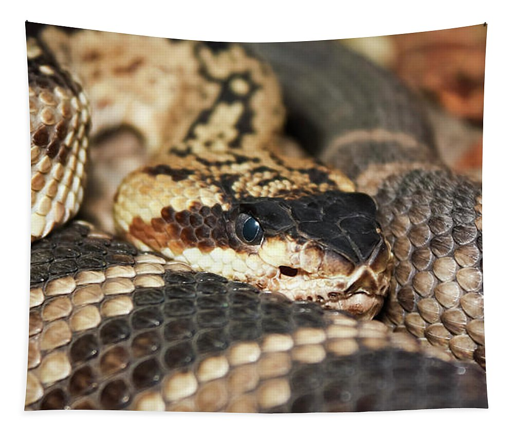 Animal Tapestry featuring the photograph A Close Up Of A Mojave Rattlesnake by Derrick Neill
