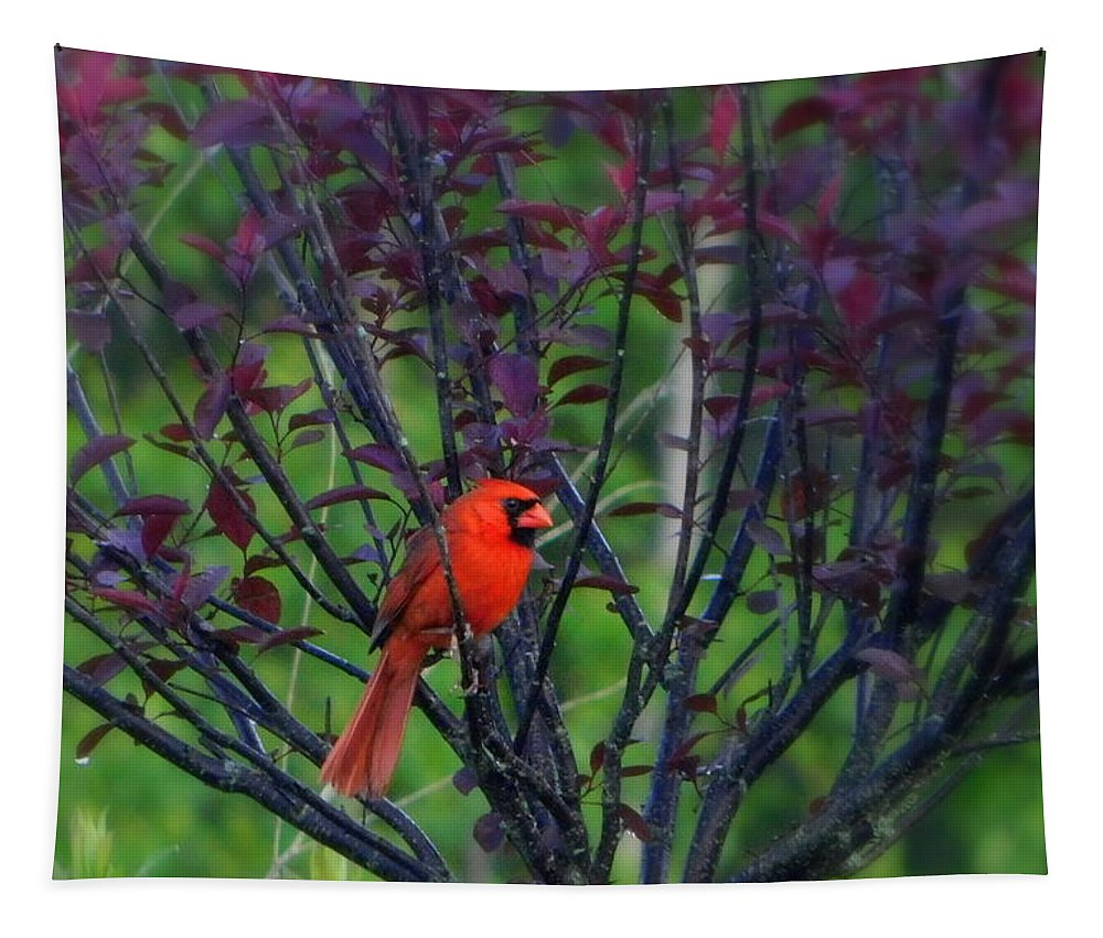 A Flash Of Red Tapestry featuring the photograph A Flash Of Red by Karen Cook