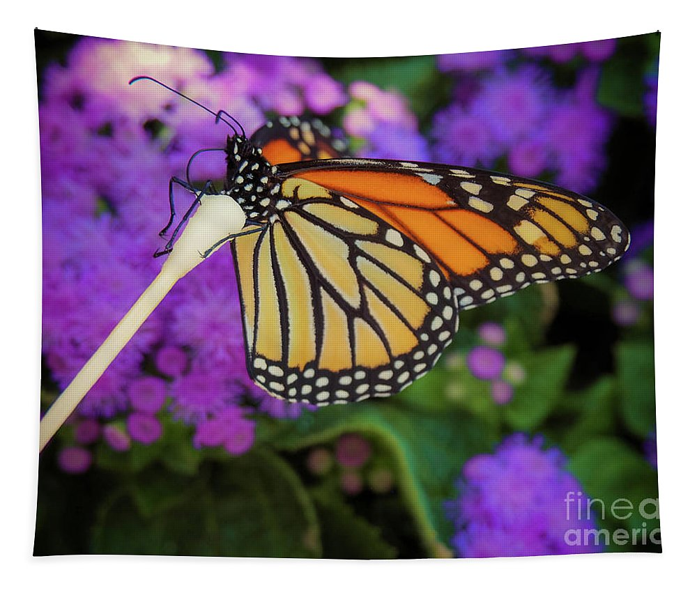 Flower Tapestry featuring the photograph A Monarch's Lunch by Gina Matarazzo