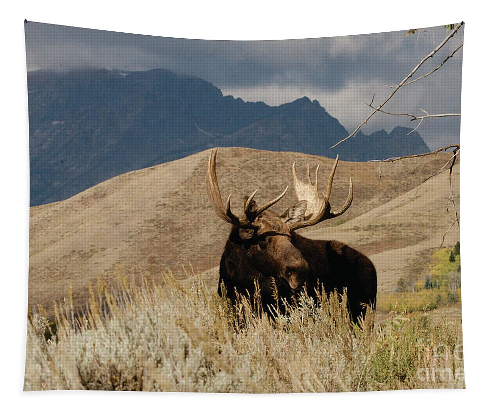Moose Tapestry featuring the photograph A Really Big Moose by Dennis Blum
