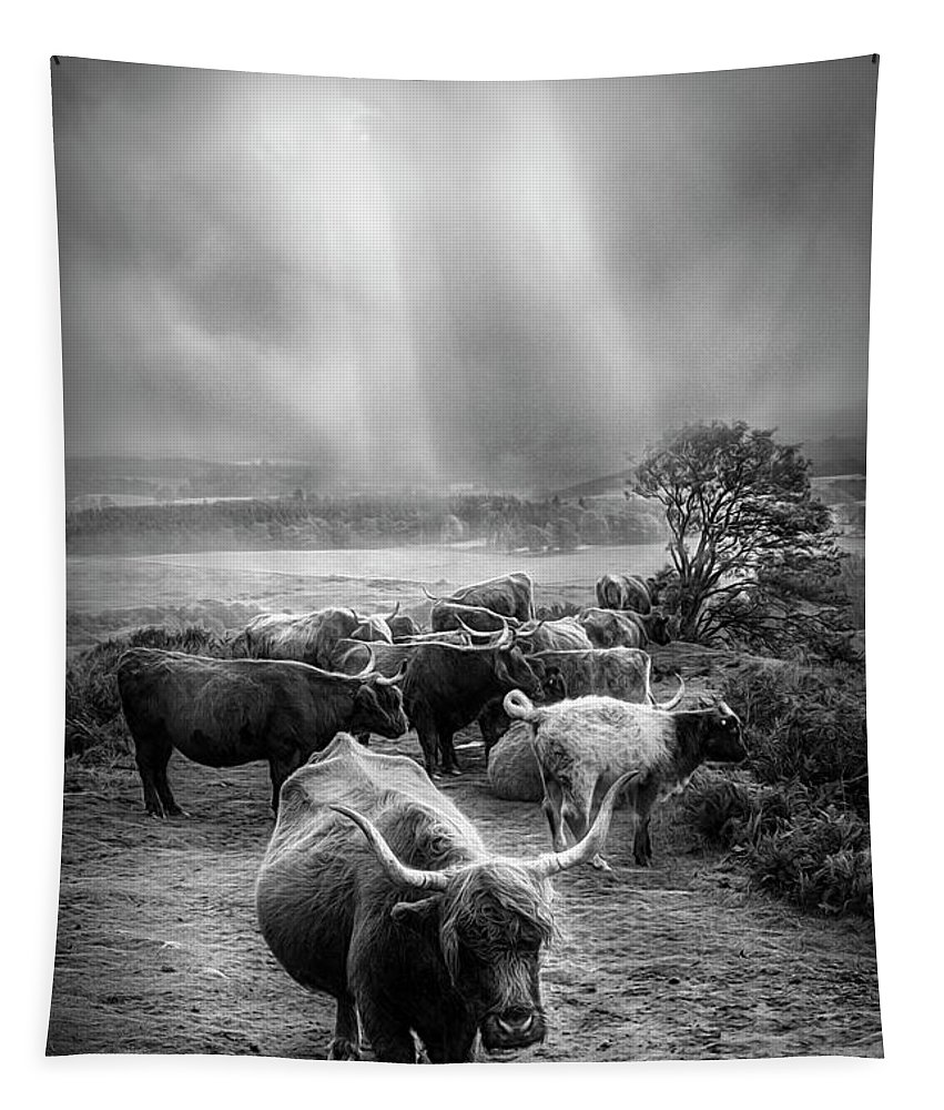 Animals Tapestry featuring the photograph After The Rain On The Mountain In Black And White by Debra and Dave Vanderlaan