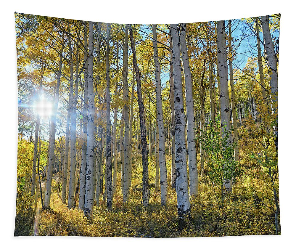Aspens Tapestry featuring the photograph Afternoon Aspens by Brian Kerls