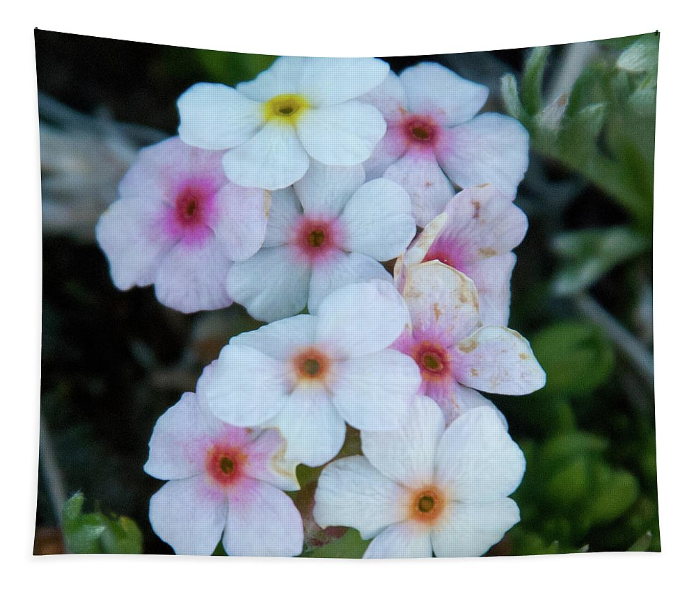Alpine Rockjasmine Tapestry featuring the photograph Alpine Rockjasmine Up Close by Cascade Colors