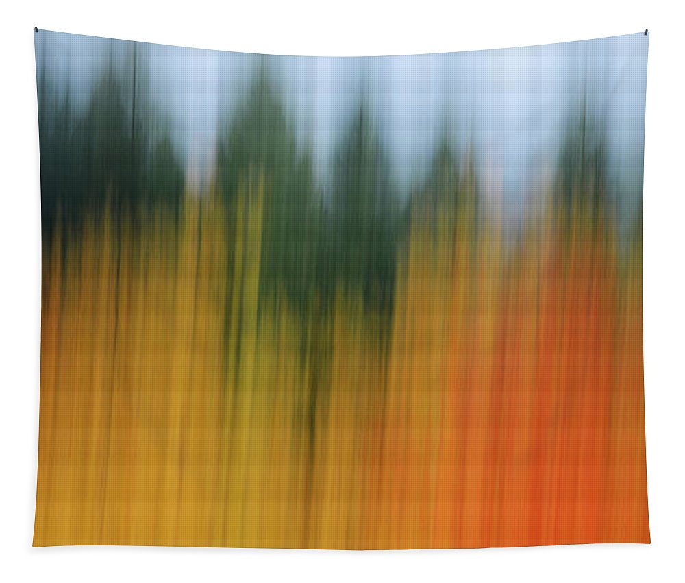 Autumn Tapestry featuring the photograph Autumn And Evergreen by Whispering Peaks Photography
