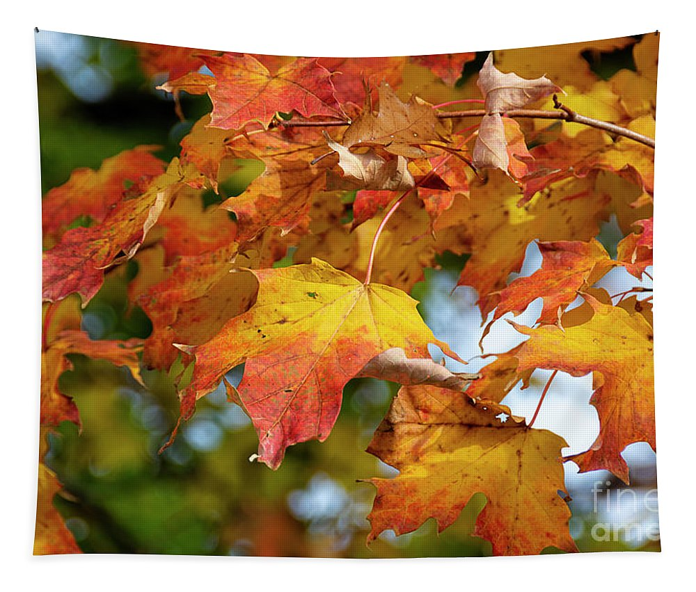 Roadtrip Tapestry featuring the photograph Autumn Colour by Lenore Locken