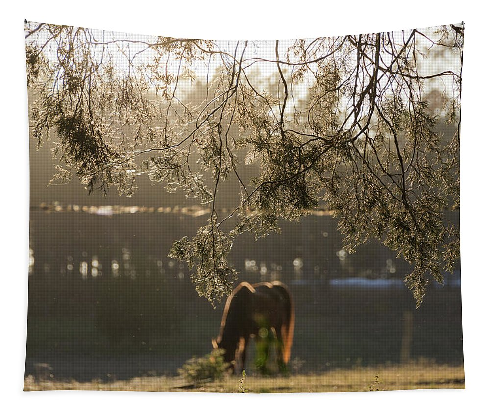 Silhouette Tapestry featuring the photograph Autumn Feelings 2 by Andrea Anderegg