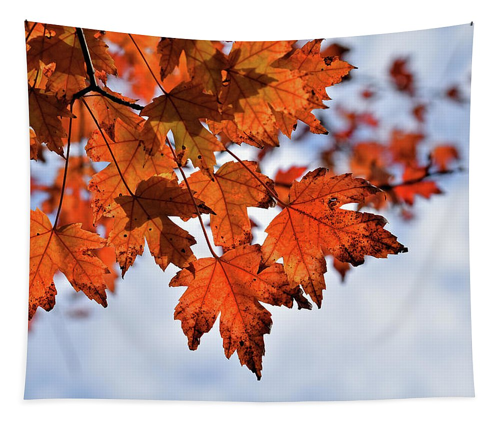 Maple Leaves Tapestry featuring the photograph Autumn Maple Leaves by Maria Keady
