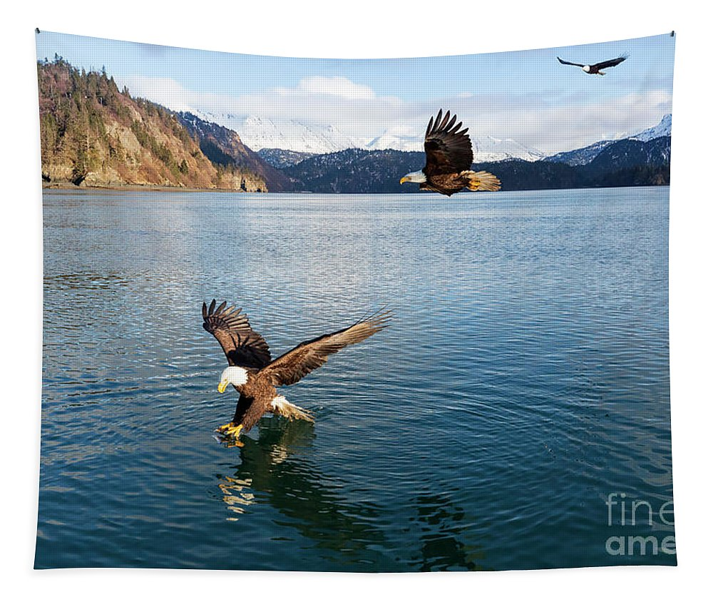 Bald Eagle Tapestry featuring the photograph Bald Eagles, Haliaeetus Leucocephalus, Fishing In China Poot Bay by Louise Heusinkveld