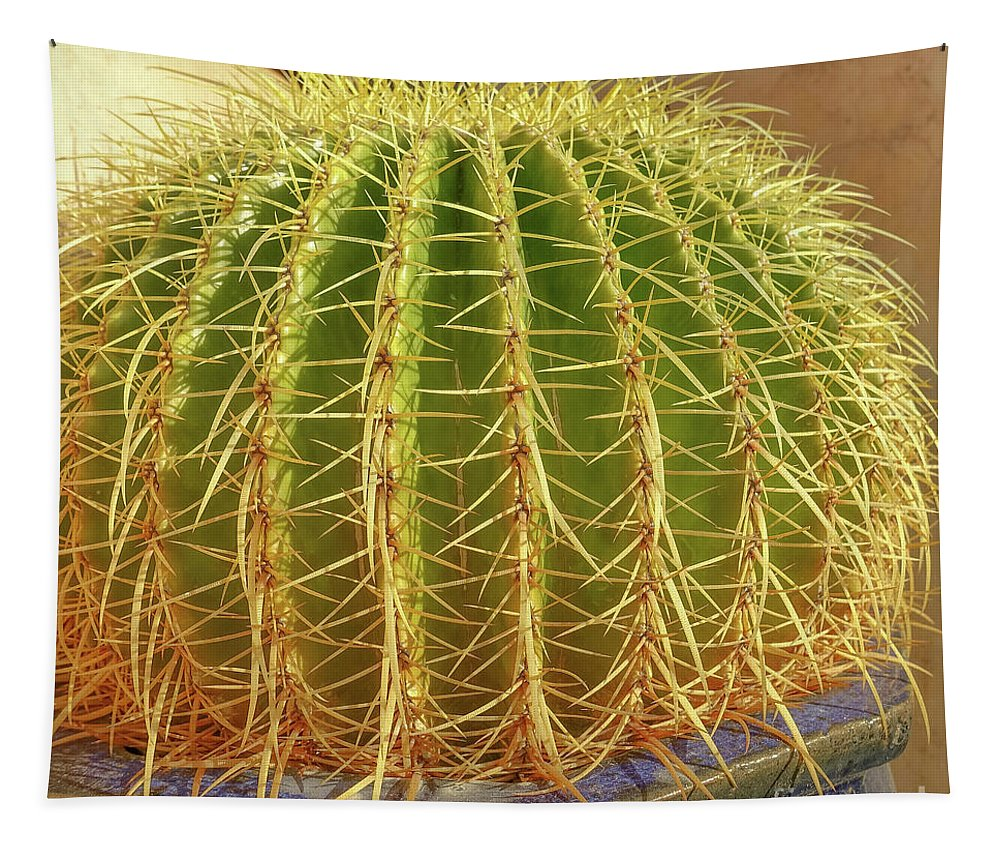 Cactus Tapestry featuring the photograph Barrel Cactus Royal Palms Phoenix by Edward Fielding