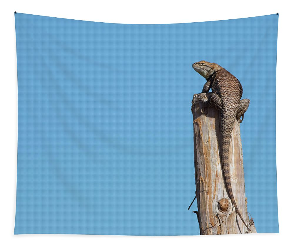 Lizard Tapestry featuring the photograph Basking Lizard by Maria Jeffs