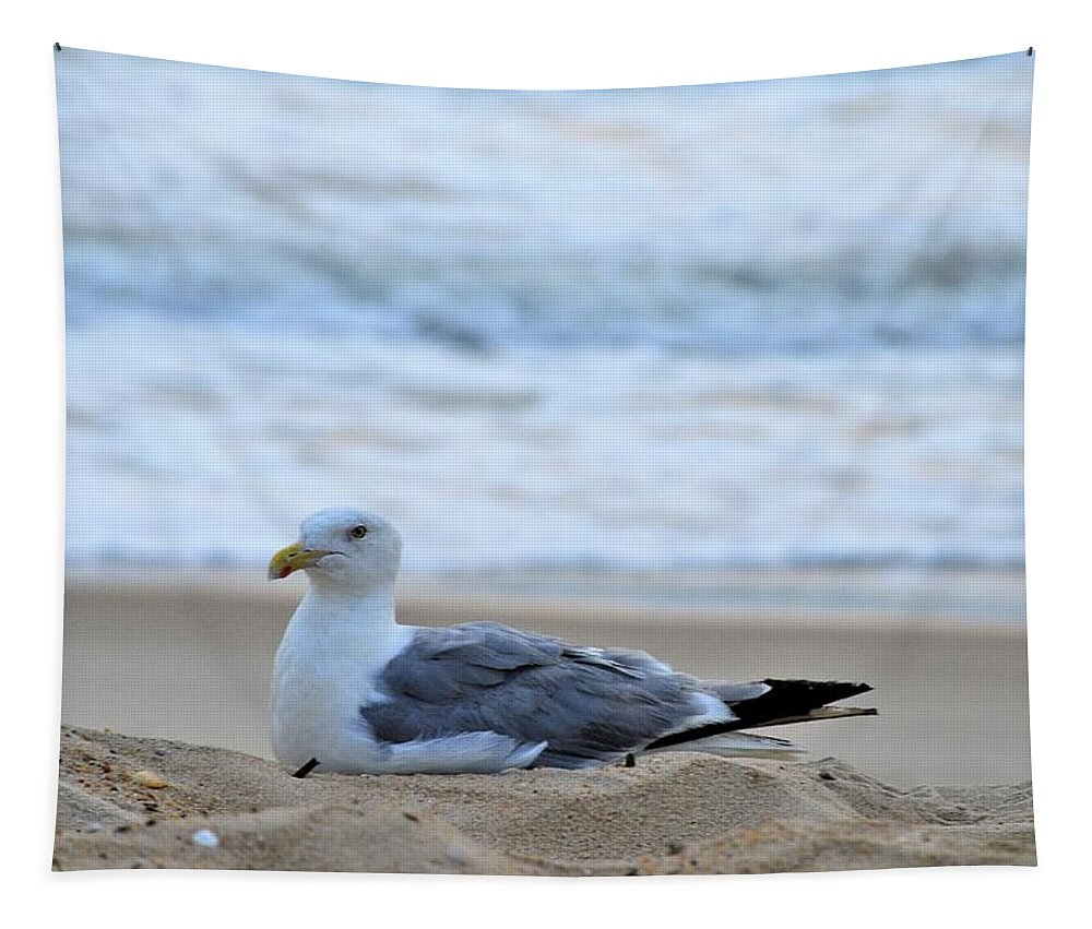 Seagull Tapestry featuring the photograph Beach Bum by Kim Bemis