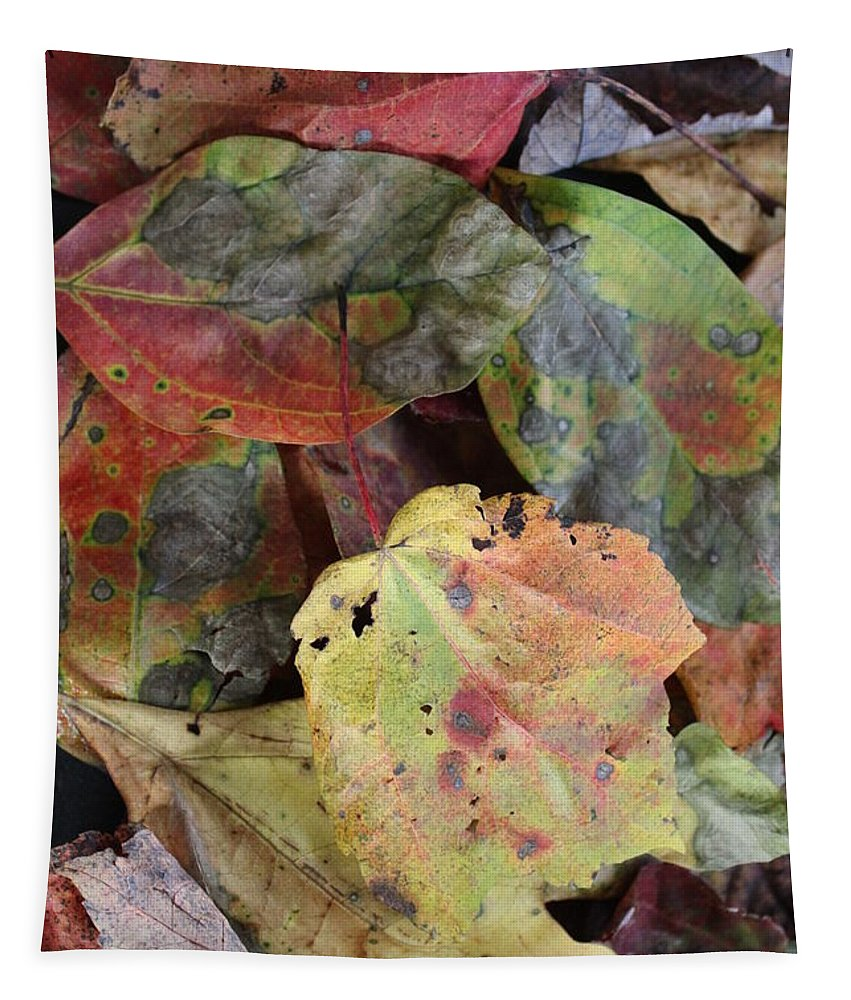 Leaf Tapestry featuring the photograph Beauti Fall by Anne Ditmars