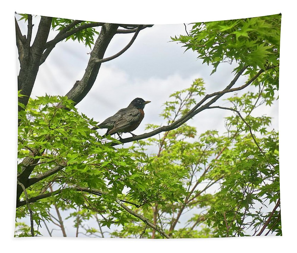 Civil War Dance Parade Flowers Pet Expo Tapestry featuring the photograph Bird Resting On Branch by Jo-anne Raskin