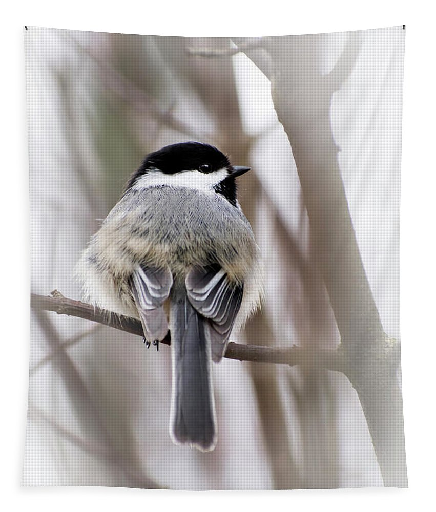 Chickadee Tapestry featuring the photograph Black Capped Chickadee by Christina Rollo