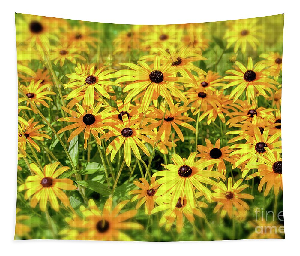 Black-eyed Susan Tapestry featuring the photograph Black Eyed Susans by Delphimages Photo Creations