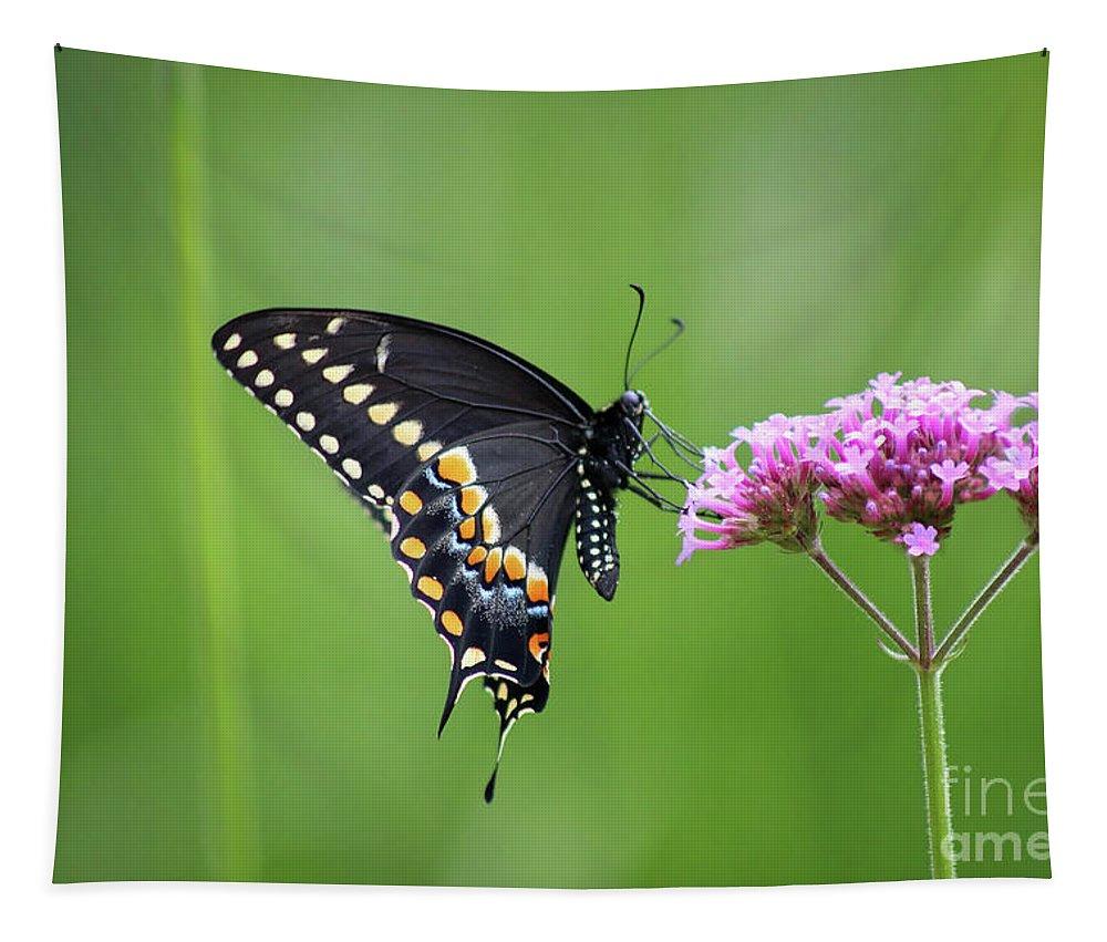 Black Swallowtail Tapestry featuring the photograph Black Swallowtail Balance by Karen Adams