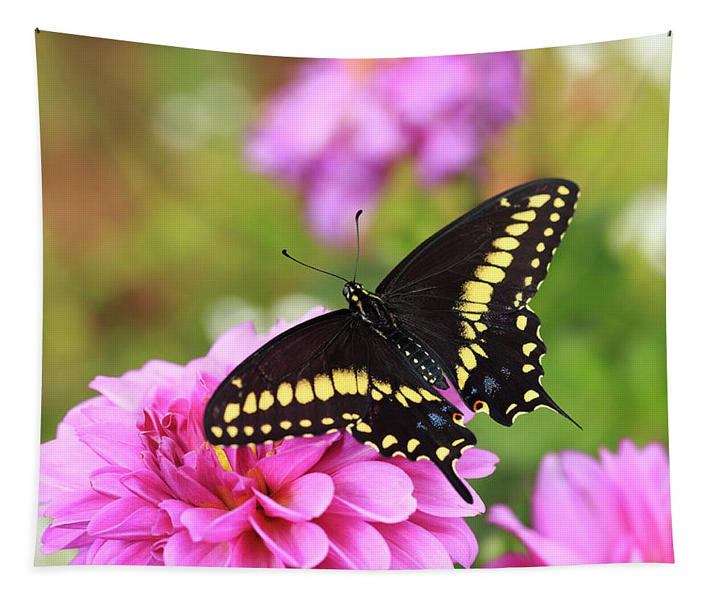 Swallowtail Butterfly Tapestry featuring the photograph Black Swallowtail by Maria Jeffs