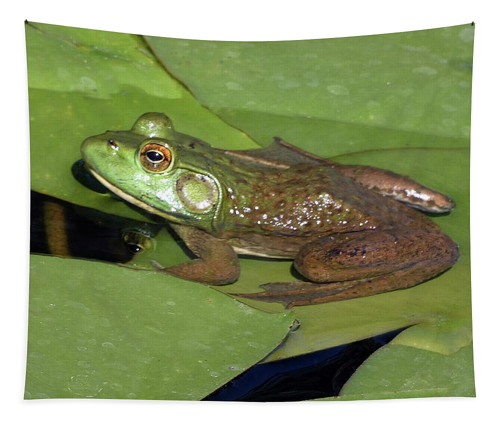 Wildlife Tapestry featuring the photograph Blending In by Susan Burger