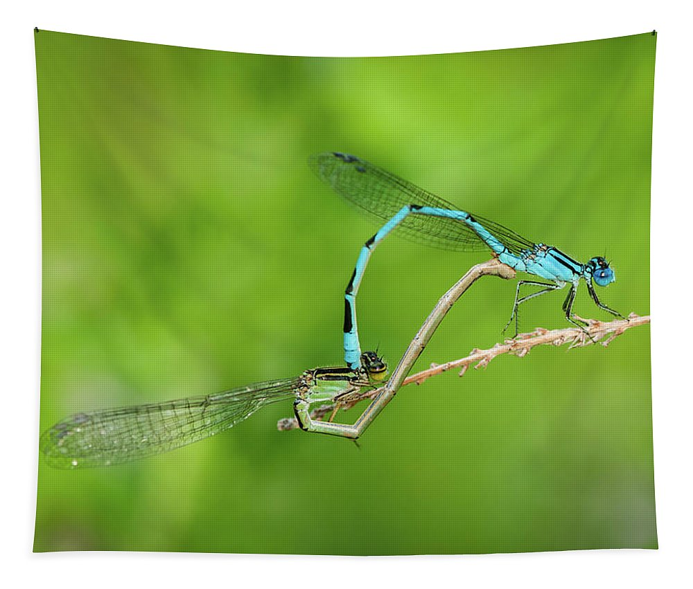 Familiar Bluet Damselfly Tapestry featuring the photograph Bonds Of Love by Todd Henson