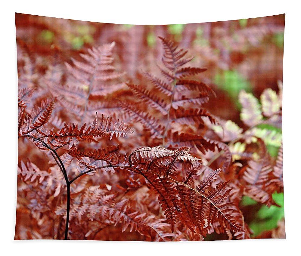 Ferns Tapestry featuring the photograph Bracken Fern by Debbie Oppermann