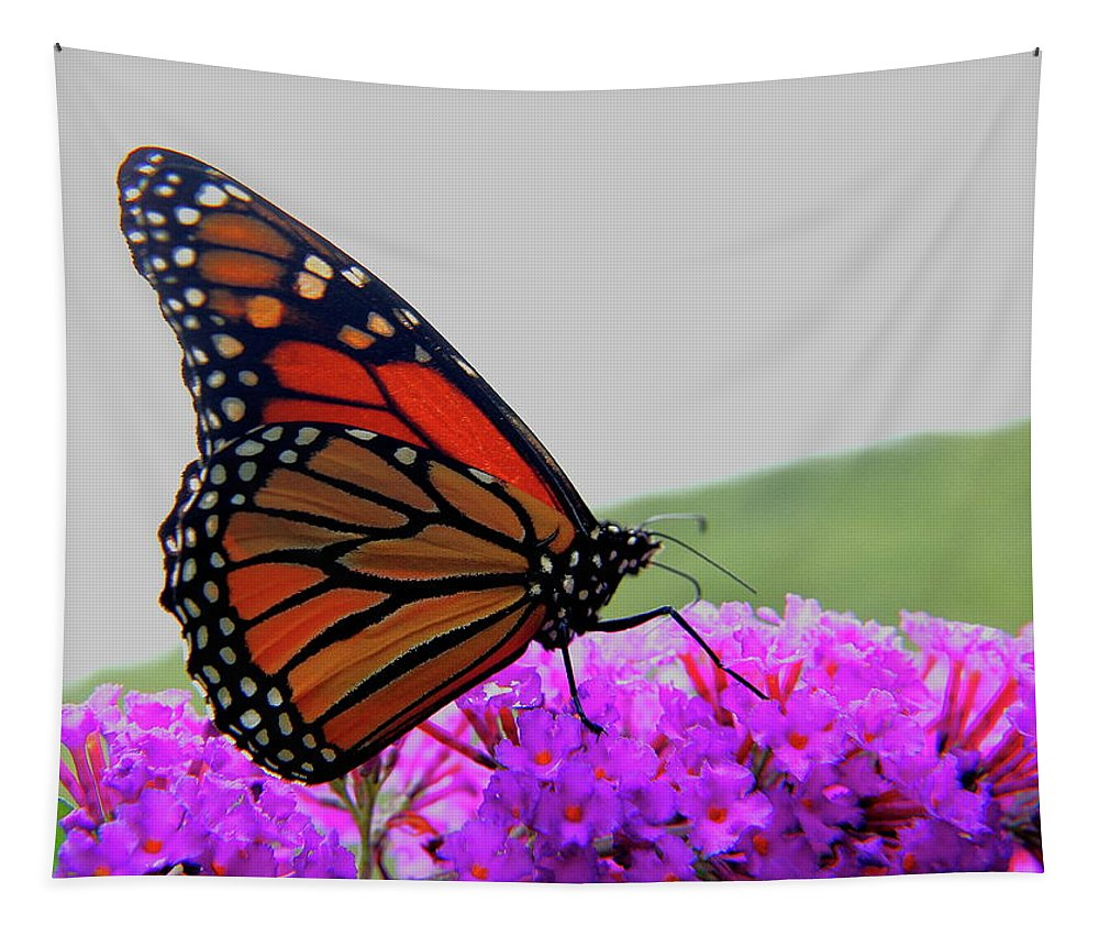 Butterfly Tapestry featuring the photograph Celebrate Goodness by Allen Nice-Webb