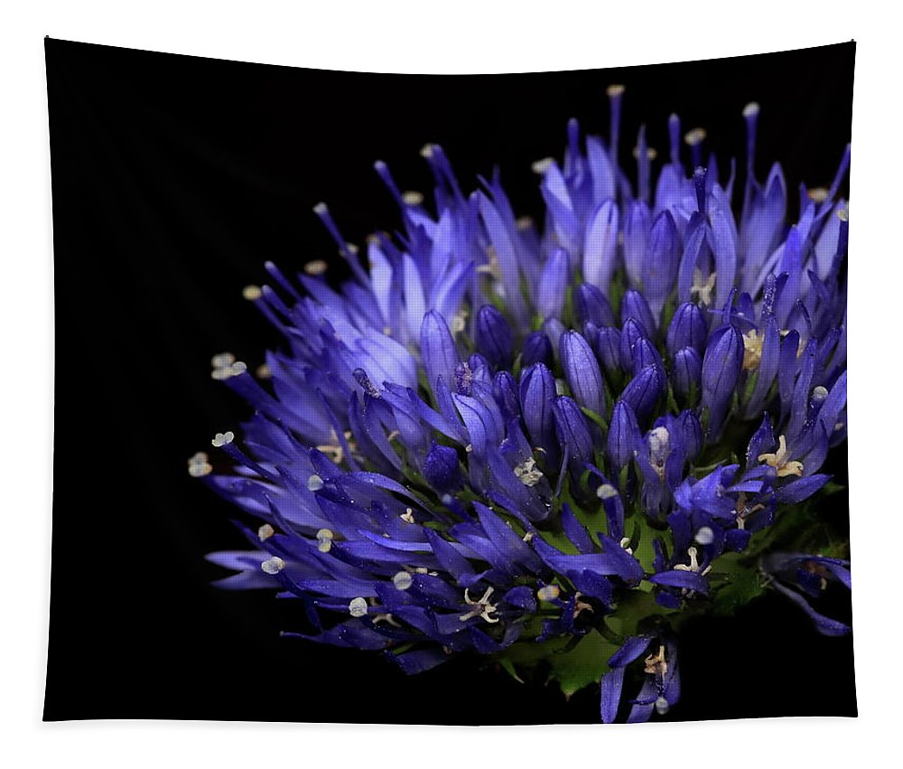 Chives Flower Tapestry featuring the photograph Chives Flower by Mark Starren