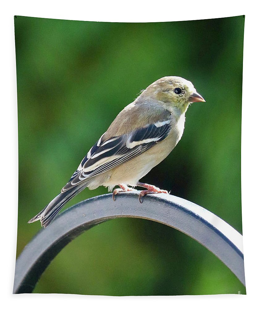 Closeup Of Goldfinch Tapestry featuring the photograph Closeup Of Goldfinch by Carol Groenen
