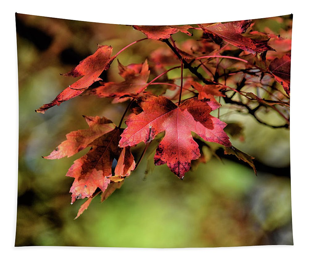 Maple Leaf Tapestry featuring the photograph Colours Turning by Maria Keady