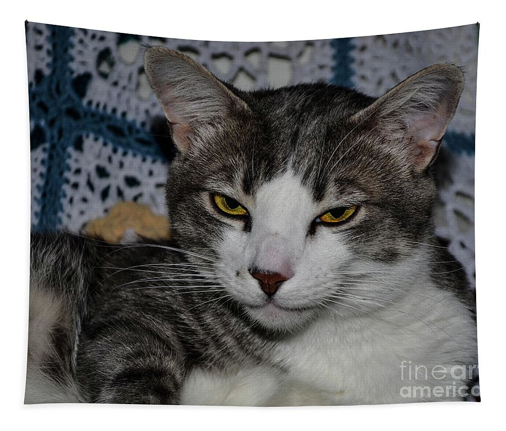 Cat Tapestry featuring the photograph Content Cat by Brenda Landdeck