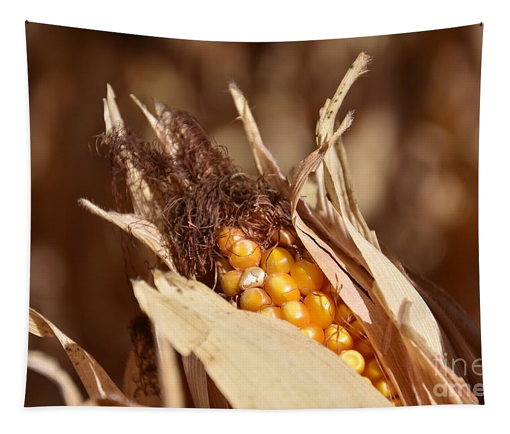 Corn Tapestry featuring the photograph Corn In Dry Husk by Brenda Landdeck