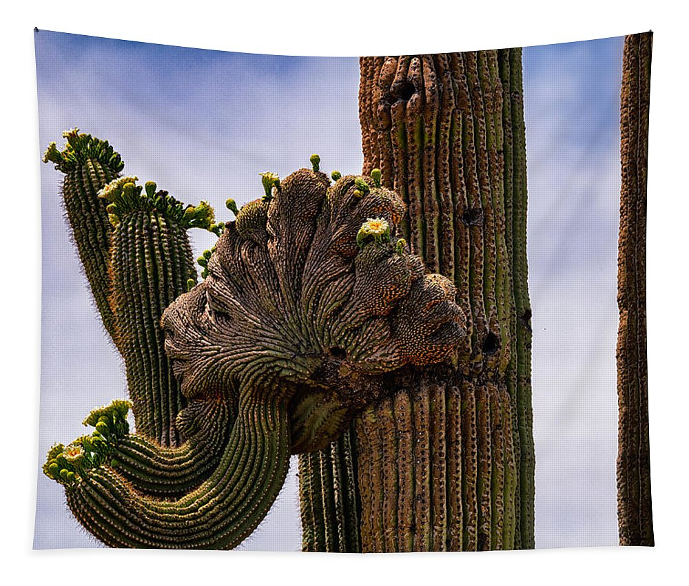 Crested Saguaro Tapestry featuring the photograph Crested by Saija Lehtonen