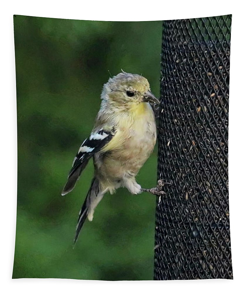 Goldfinch Tapestry featuring the photograph Cute Goldfinch At Feeder by Carol Groenen
