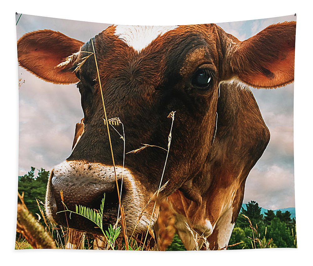 Cow Tapestry featuring the photograph Dairy Cow by Bob Orsillo