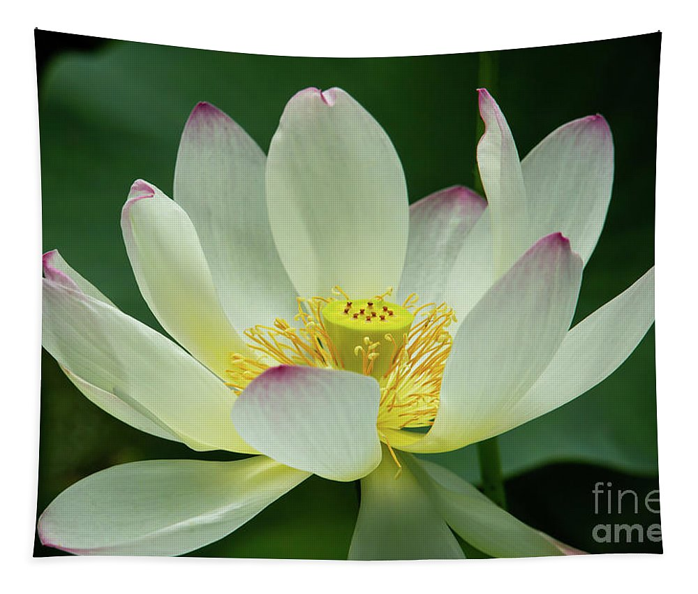 Spring Tapestry featuring the photograph Delicate And Graceful Lotus by Sabrina L Ryan