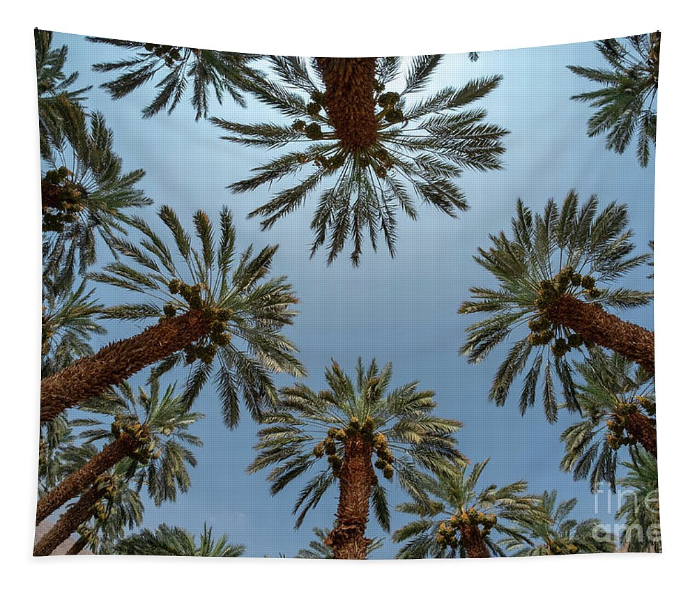Desert Tapestry featuring the photograph Desert Agriculture. Palm Tree Plantation F10 by Dan Yeger