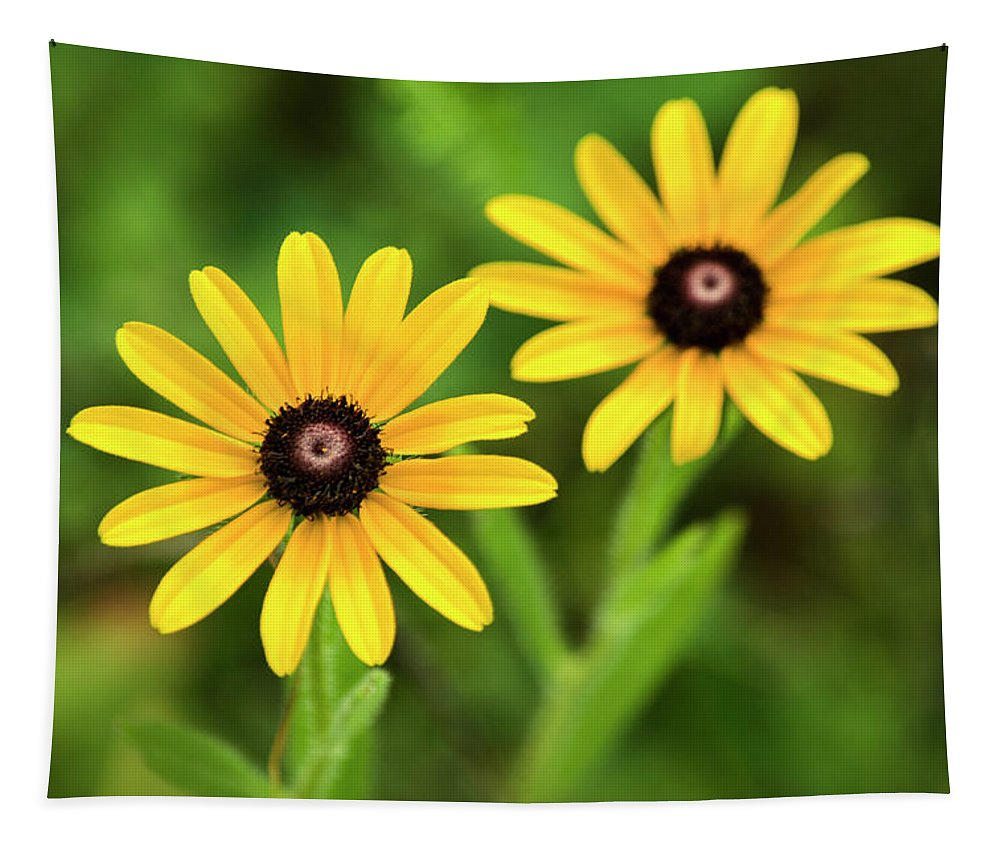 Daisies Tapestry featuring the photograph Double Daisies by Christina Rollo