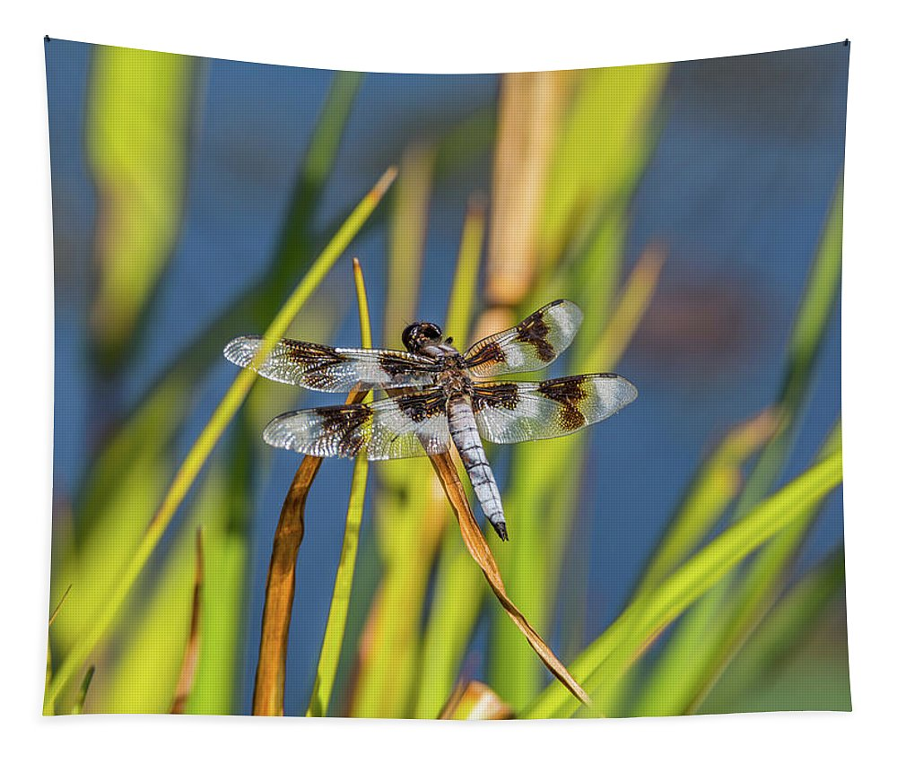 Abdomen Tapestry featuring the photograph Dragonfly Perched By Pond by Marv Vandehey