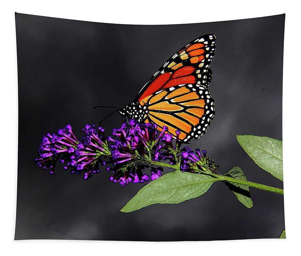 Butterfly Tapestry featuring the photograph Drink Deeply Of This Moment by Allen Nice-Webb